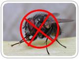 灭苍蝇-卓安杀虫公司