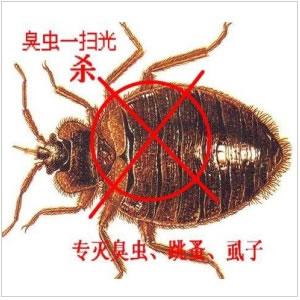 灭臭虫,杀臭虫,除臭虫,臭虫防治,虹舟除虫杀虫公司