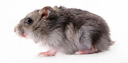 灭鼠公司,灭鼠,深圳虹舟灭鼠公司