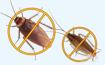 灭蟑螂,杀蟑螂,虹舟杀蟑螂公司