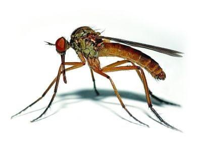 杀蚊虫|灭蚊虫|蚊子防治-虹舟杀虫除虫公司