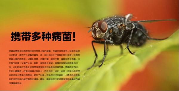 灭苍蝇 消灭苍蝇 杀苍蝇 除苍蝇 苍蝇防治-虹舟杀虫除虫公司